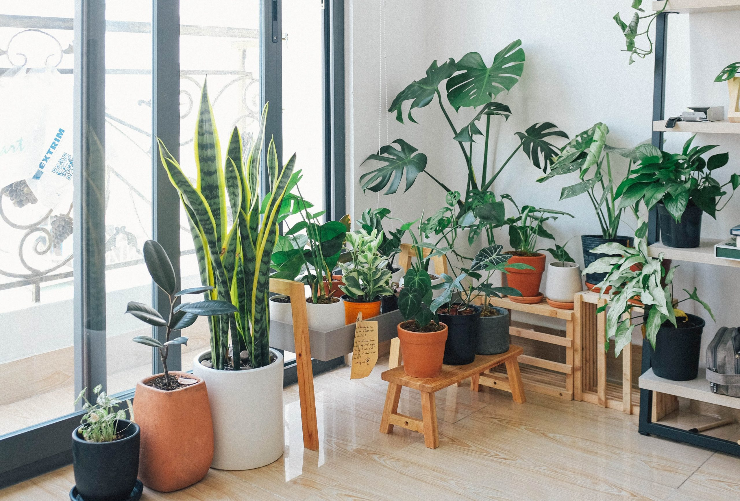 Indoor Plants You Can Grow in the Winter Season