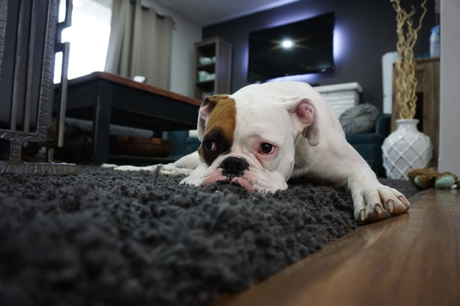 Farmpally Advises on Pup's Socialization in a New Home