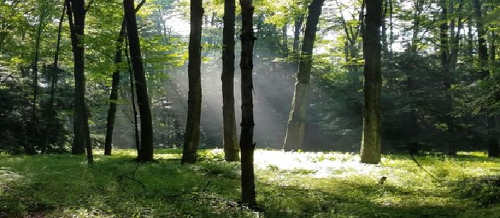 Top 5 Hidden Benefits of Forests